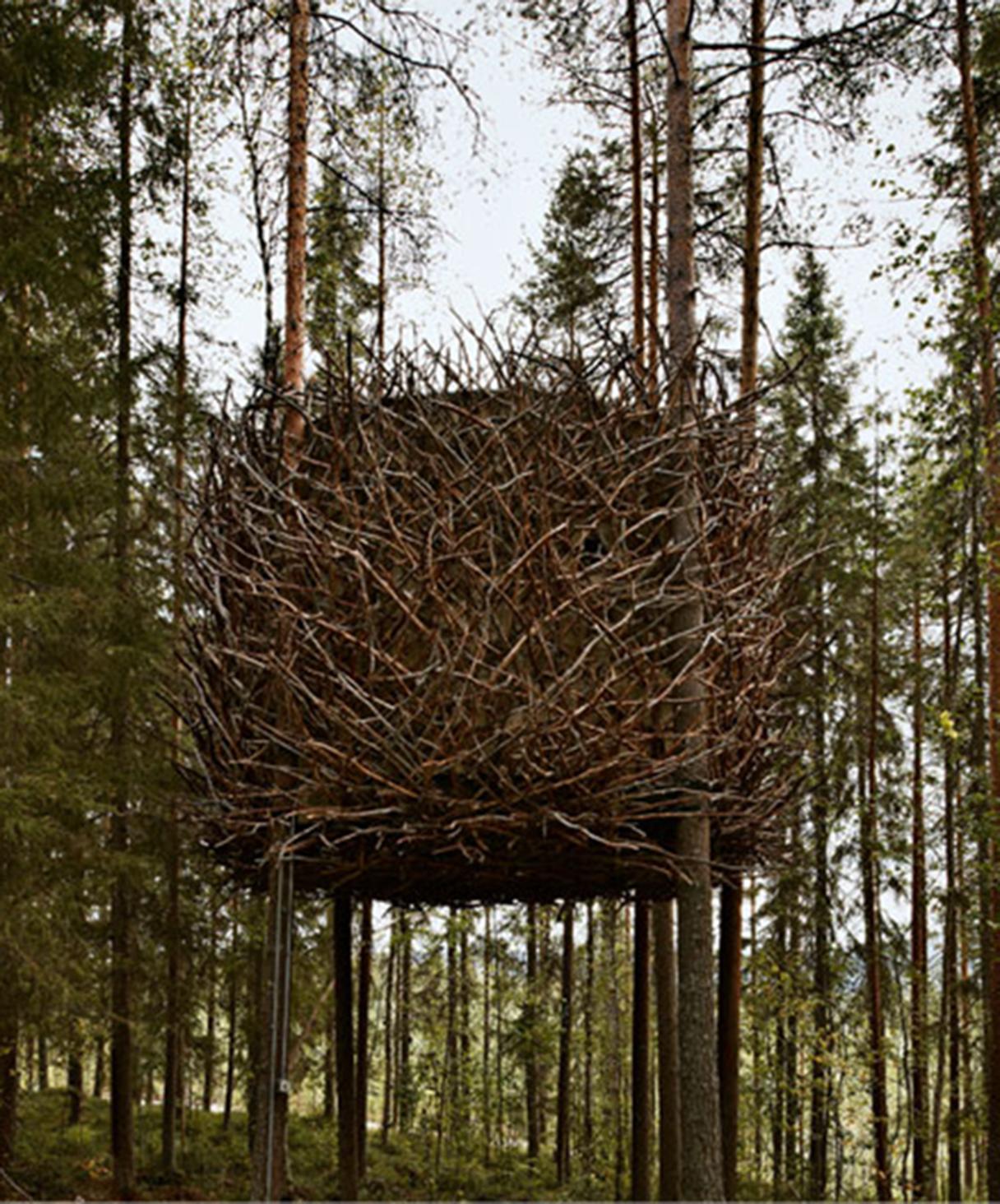 Case su alberi la baumraum di bremen in germania progetta - Costruire case sugli alberi ...