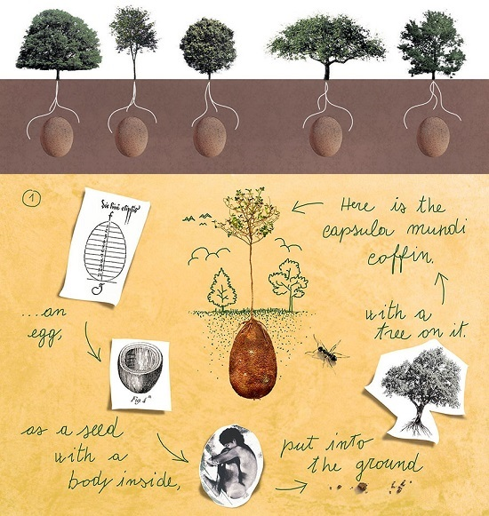 defunti-biodegradabili-alberi